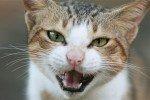 Зафиксирована вероятность заражения туберкулезом от кошки