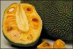 Диетологи проявили интерес к плодам хлебного дерева