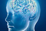 Ученые установили, что происходит с головным мозгом в состоянии наркоза