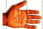 Сексуальность зависит от длины безымянного пальца