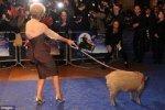 Эмма Томпсон взяла на премьеру свинью