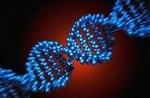 Полового партнера научились выбирать по анализу ДНК