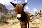 Любовь с животным и последствия