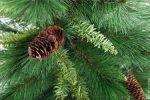 Живая или искусственная ёлка на Новый Год?