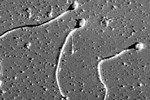 Качество спермы начинает снижаться с 35-летнего возраста — на 5 лет раньше, чем принято было считать