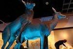 В спальне природы: в Мюнстере открылась выставка о сексе