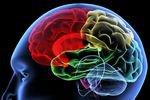 Cекс положительно влияет на активность мозга