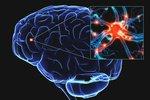 Выявлены клетки мозга, которые способствуют социализации