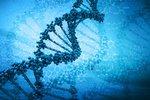 Учеными создана первая подробная карта развития человеческой ДНК