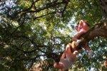 Парень ободрал пенис, когда занимался сексом с девушкой на дереве